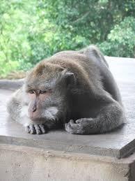 Image result for depressed monkey