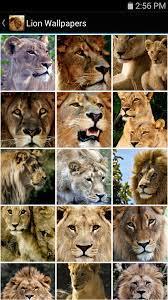 Amazon.com: Lion Wallpapers: Appstore ...