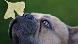 100+ Free Sniffing & Dog Photos - Pixabay