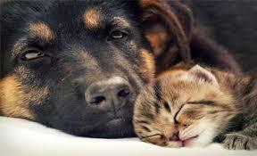 chat boulimique nous en pouvons plus