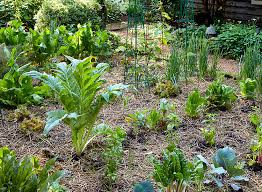 calculate how many vegetables to plant