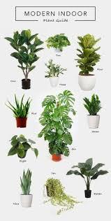 Decor Home, Living Rooms, Plants Living, Hanging Plants, Floating Plantsu2026
