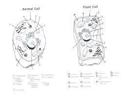 Organelles In Plant And Animal Cells Venn Diagram Plant Cell Label Worksheets Odmartlifestyle Com