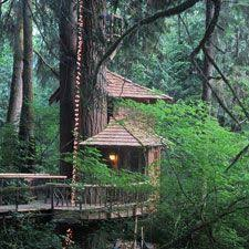 treehouse masters treehouse point. Interesting Point TreeHouse Point Bu0026B Near Seattle So Want To Go Sometime Treehouse Hotel In Masters