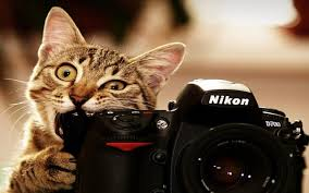 Funny Animal Backgrounds (Page 1 ...