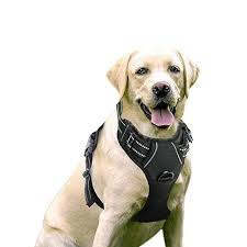 Voyager Harness Size Chart Top Best Harnesses For Small Dogs 2019 Reviews