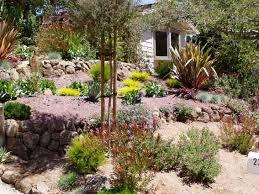 Small Picture Drought Tolerant Backyard Designs Backyard Design And Backyard Ideas