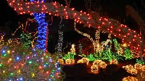 Gardenenvy Deck The Cactus With Holiday Lights