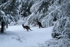 Image result for snow images australia 2019