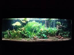 ImageUploadedByFish Lore Aquarium Fish Forum1420057741.107336.jpg