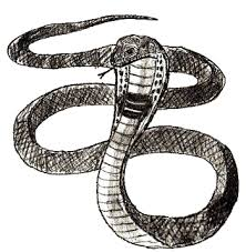 snake head drawings in pencil. Interesting Drawings How To Draw Snake Step 6 Throughout Snake Head Drawings In Pencil D