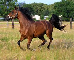 Pferd Wikiquote