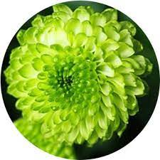 18 types of green flowers proflowers