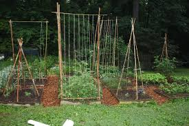 Small Picture Garden Trellis Diy Trellises For Climbing Plants Plans Designs
