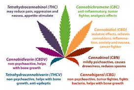 main chemicals in weed