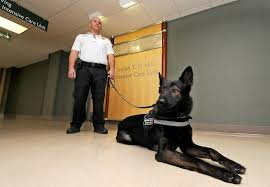 Hospital Security Guard Ellis Hospital Adds Four Legged Security Guard The Daily Gazette