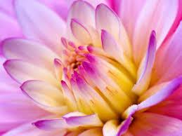 hot pink flowers wallpaper. Perfect Hot Hot Pink Flower Wallpaper 10 1600x1200 768x576 For Flowers N