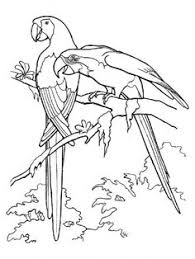 Small Picture 64 Realistic and detailed kingfisher bird coloring pages for