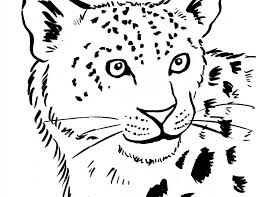 Baby Snow Leopard Coloring Pages