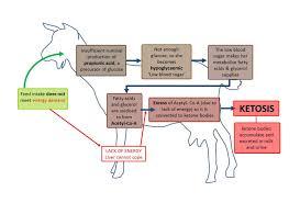 Farm Health Online Animal Health And Welfare Knowledge Hub
