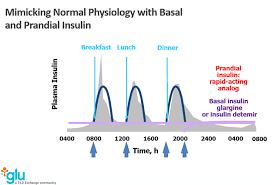 Insulin Chart Glu What We Learn About Insulin From Glu