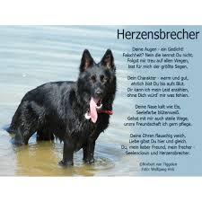 Hund Und Der Bärenhund