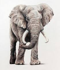 colorful elephant drawings. Simple Colorful Colored Pencil Drawing Of An Elephant  Artwork Paintings Pinterest  Drawings Drawings And Pencils Intended Colorful Drawings