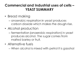 commercial and uses of cells yeast summary