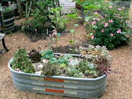 Small Picture Horse trough succulent garden Crafty Garden Treasures