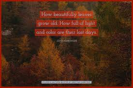 Autumn Quotes Simple Autumn Quotes And Fall Sayings About Colors Leaves The Season