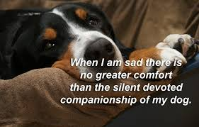 Pet Quotes Beauteous Famous Pet Quotes And Sayings Cute Status About Animals