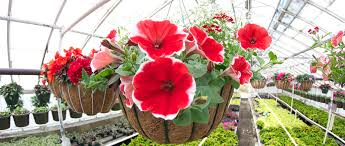 garden centers nj. Variety Growers Neptune NJ 07753_ Garden Centers In NJ_Flower Shops Distributors Shop NJ_White Nj N