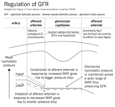 Gfr Rate Chart Acute Kidney Injury Aki Mcmaster Pathophysiology Review