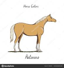 Foal Color Chart Horse Color Chart On White Equine Coat Colors With Text