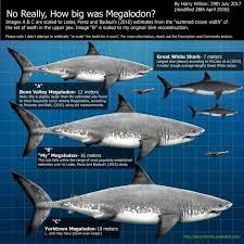 megalodon shark. Simple Shark While The Megalodon Was Certainly Largest Shark Known To Have Ever  Lived It Not Only Contender For Biggest Fish Throughout Shark