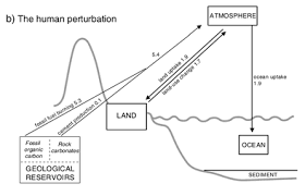 carbon cycle human perturbation of the carbon cycle