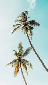 1920x1080 palm tree top hd desktop wallpaper : Let S Go Coconuts Enjoy 10 Tropical Iphone Wallpapers