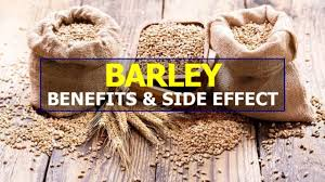 It is one of the oldest grains and is consumed across the world in the form of malt, breads, soups and stews. Barley Benefits And Side Effects Youtube