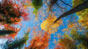 Autumn trees, View wallpaper ...