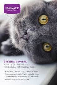 never let expensive vet bills come between you and the best care for your favorite feline get a free quote personalize the perfect policy for your pet