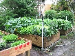 florida vegetable gardening gardening in north vegetable gardening for health north garden guide large size vegetables