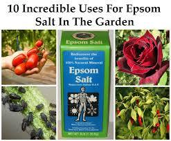 epsom salt gardening. Epsom Salt Gardening Natural Living Ideas