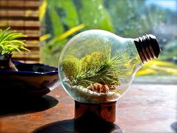 light bulb hanging air plant terrarium