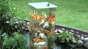 koi pond lighting ideas. simple pond give your fish the equivalent of a pond elevator u2013 now thatu0027s an elegant  pad we really do think they like to come up see how we live to koi pond lighting ideas o