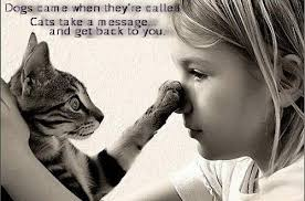 Quotes About Pets And Friendship Delectable Quotes About Pets And Friendship Amazing Drama Queen Cat's