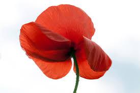 lee karen stow poppy