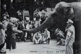 「1949年 - インド首相のジャワハルラール・ネルーから贈られたゾウ・インディラが上野動物園に到着。」の画像検索結果