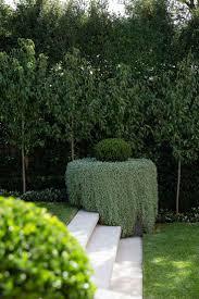 Best 25+ Hedges ideas on Pinterest | Hedges landscaping, Garden hedges and  Backyard trees