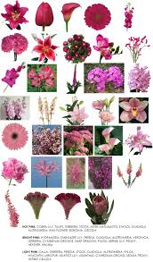 color series pink flowers for weddings