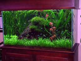 Photo 2 of 7 Fish Tank Aquarium Decorating Ideas . (superb Fish Decorations  For Tank #2)